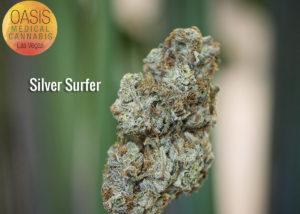 silver surfer strain